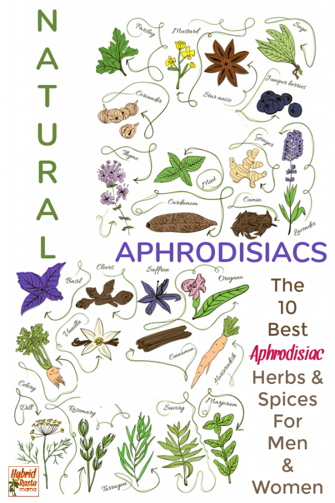 Collage of aphrodisiac herbs for men and women to improve sex life including dill, rosemary, marjoram, horseradish, basil, cloves, and oregano.