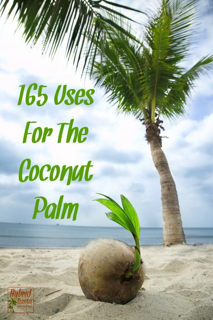 A coconut palm tree on a sandy beach