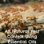 All-Natural Pest Control Using Essential Oils