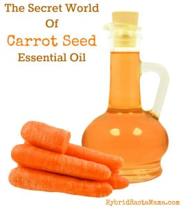Do you know about the secret world of carrot seed oil? It is an oil that has numerous benefits! Learn more here and grab my moisturizer recipe. From HybridRastaMama.com