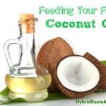 Feeding Your Family…Coconut Oil!