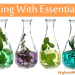 Essential Oils Versus Herbs Plus Cooking With EOs (Guest Post)