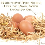 How To Extend The Shelf Life of Eggs With Coconut Oil