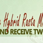 Who Is Hybrid Rasta Mama?