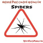Natural Pest Control for Spiders Using Coconut Oil, Essential Oils, Herbs, and More