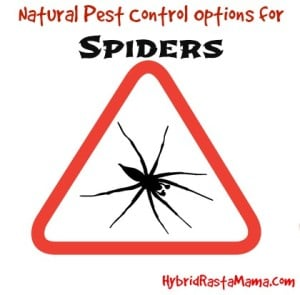 Looking for ways to keep spiders away naturally? Coconut oil, herbs, and essential oils can help! Find out how you can use natural pest control for spiders from HybridRastaMama.com