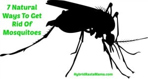 Black mosquito image on white background