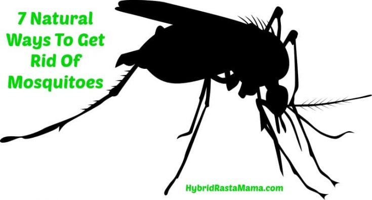 7 Natural Ways To Get Rid Of Mosquitoes