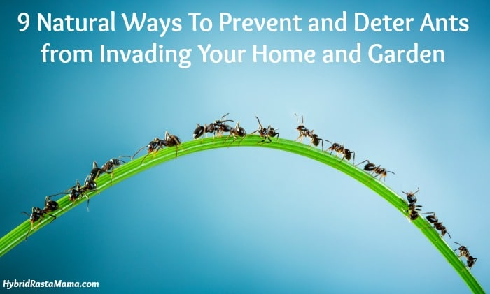 9 Natural Ways To Prevent And Deter Ants From Invading Your Home
