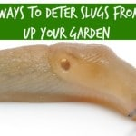 4 Natural Ways To Deter Slugs From Gobbling Up Your Garden