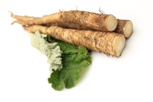 Fresh burdock root