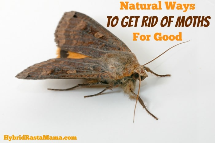 exceptional How Do I Get Rid Of Moths In My Kitchen #8: Natural Ways To Get Rid Of Moths For Good: HybridRastaMama.com