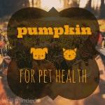 Pumpkin For Pet Health