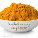 Holistic Health Care for Dogs: Using Turmeric