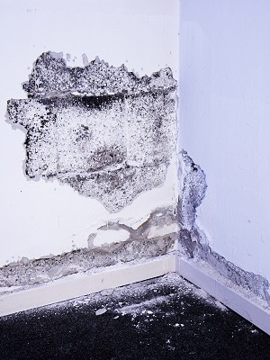 Damage due to damp in the basemant
