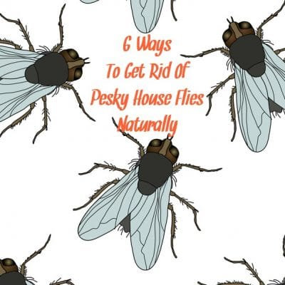 6 Ways To Get Rid Of House Flies Naturally