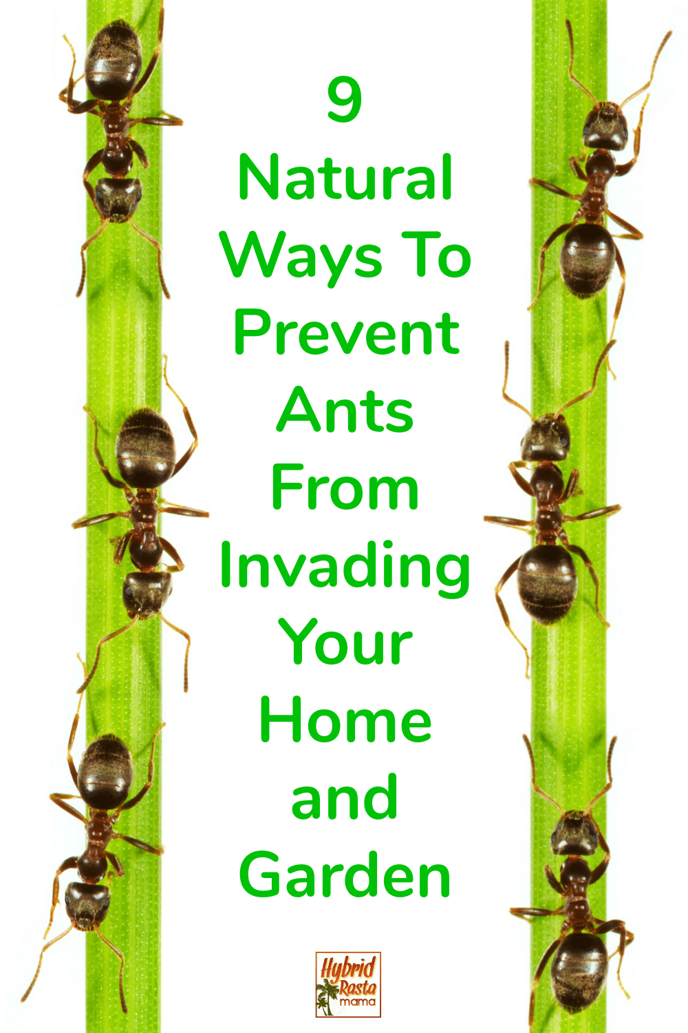 Ants invading a bamboo tree with the words 9 natural ways to prevent ants written in green.