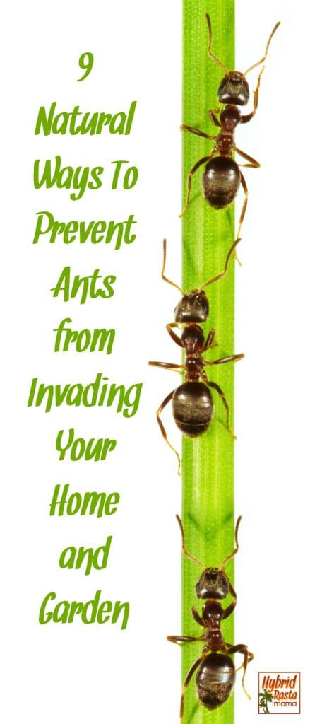 Brown ants crawling up a stalk of green bamboo