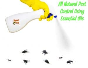 White spray bottle spraying flies and beetles being held by yellow gloved hand