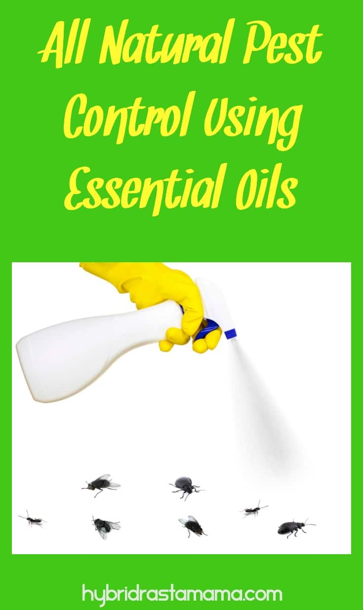 Learn more about all natural pest control using various essential oils. Find out which oil works best for 20 insects. In addition grab a great all-natural bug off spray and a fire ant revenge potion from HybridRastaMama.com. #pestcontrol #greenliving #bugspray #essentialoils