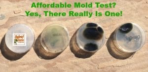 Testing for the presence of mold can break the bank. Are you looking for an affordable mold test? Learn which product I used and love. From HybridRastaMama.com