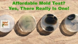 Affordable Mold Test? Yes, There Really Is One!