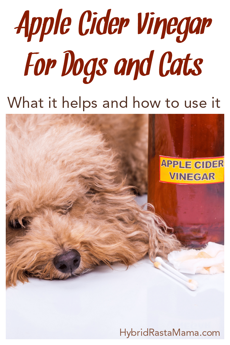 A fluffy dog next to a bottle of apple cider vinegar.
