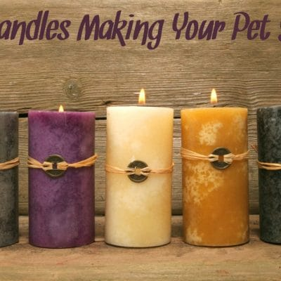 What You Need To Know About Candles and Cats, Dogs, and Other Pets