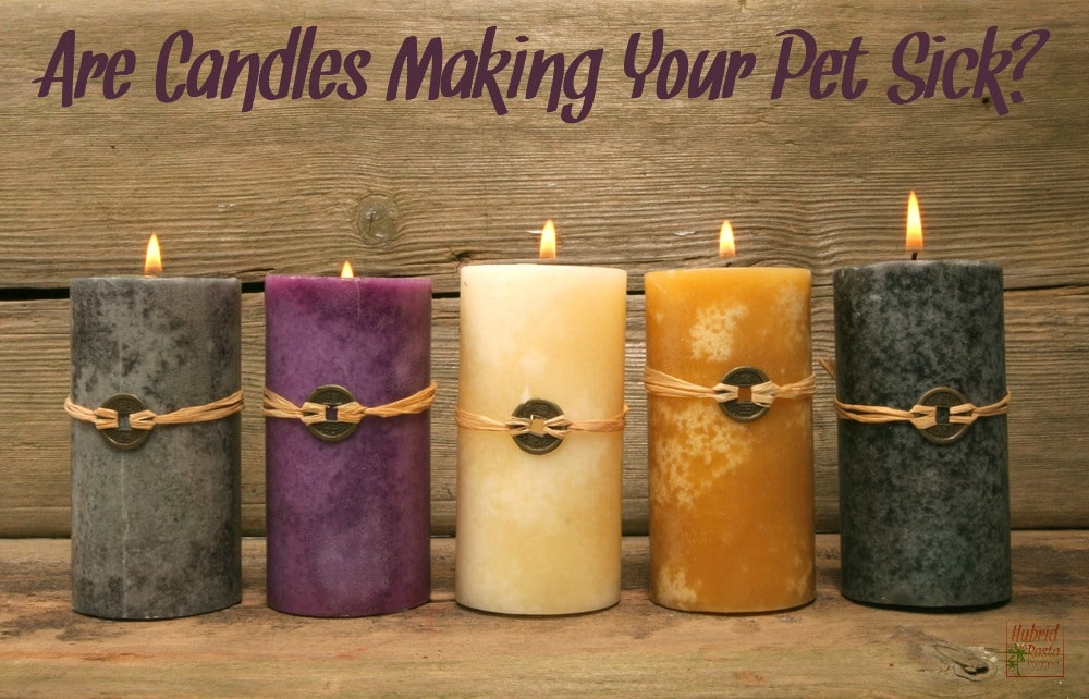 Are candles making your pet sick? Quite possibly. Learn more about the dangers of candles as well as which candles are safe for people and pets.