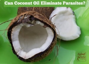 Can Coconut Oil Eliminate Parasites? by HybridRastaMama.com