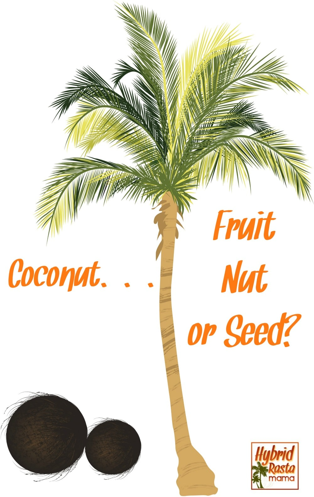 "A coconut palm tree with coconuts below. Caption asking the question ""what is a coconut? Is coconut a fruit? is coconut a nut? Is coconut a seed?"""