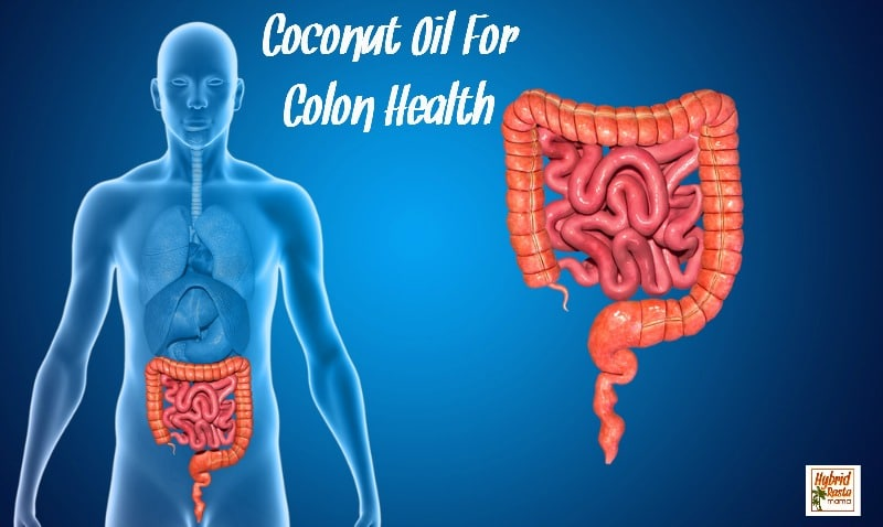 Digestive disorders are on the rise making colon health important to longevity and overall well-being. Good thing there is coconut oil for colon health! Learn more in this post from HybridRastaMama.com.