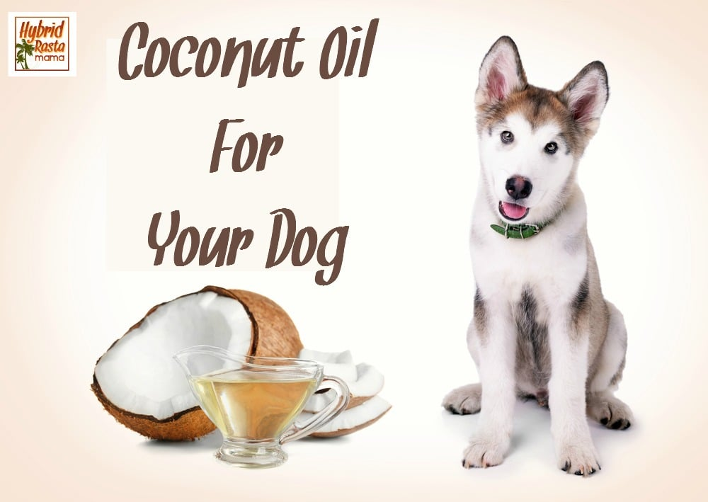 Your Guide To Coconut Oil and Dogs