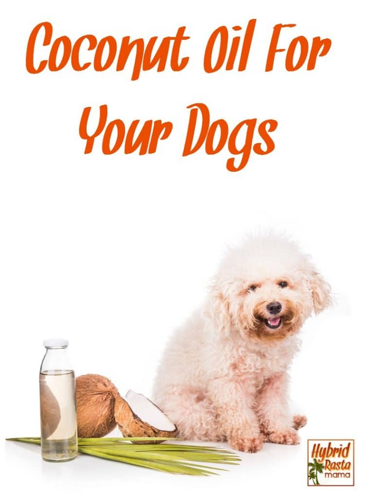 Coconut oil isn't just for us humans! Yep - coconut oil for dogs is the way to go when it comes to keeping your furry friends healthy and happy. Learn more from HybridRastaMama.com.
