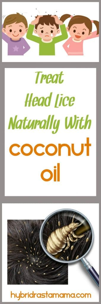 Coconut oil and head lice! Did you know that coconut oil is a natural way to combat head lice? Check out how you can get great results with coconut oil from HybridRastaMama.com.