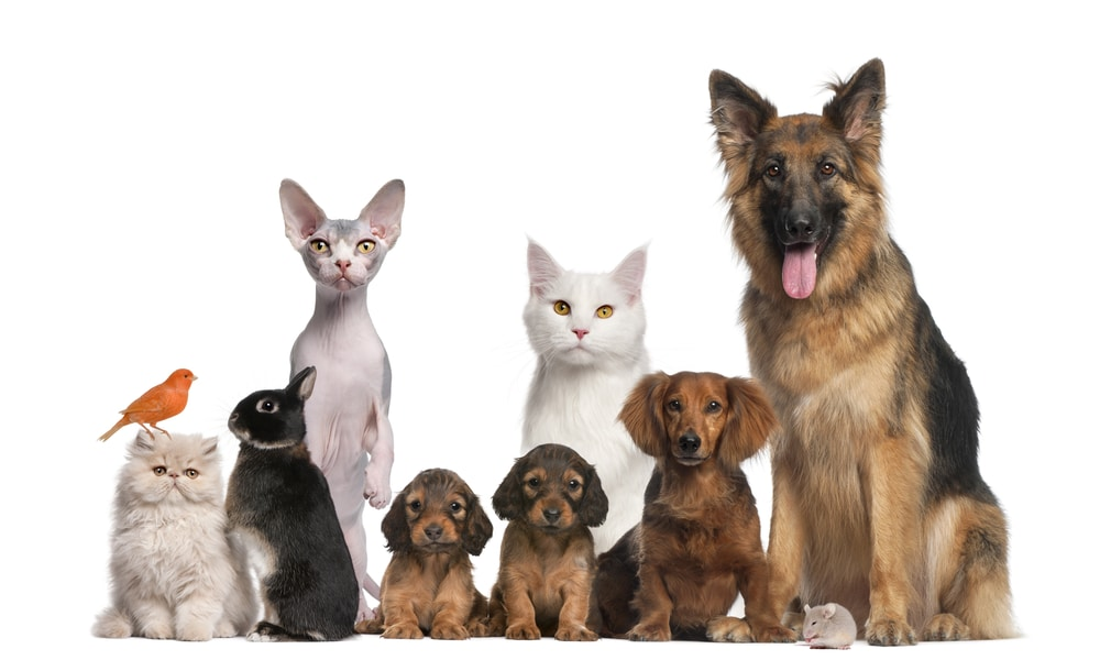 A group of animals including dogs, cats, a black rabbit, and an orange bird. Examples of pets that get mold spores in their fur.