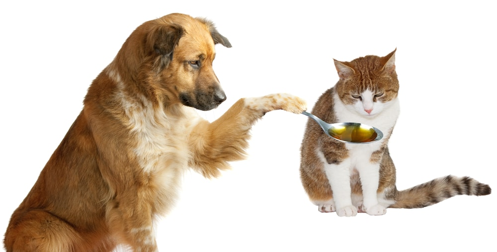A dog giving a cat a spoonful of medicine after mold exposure
