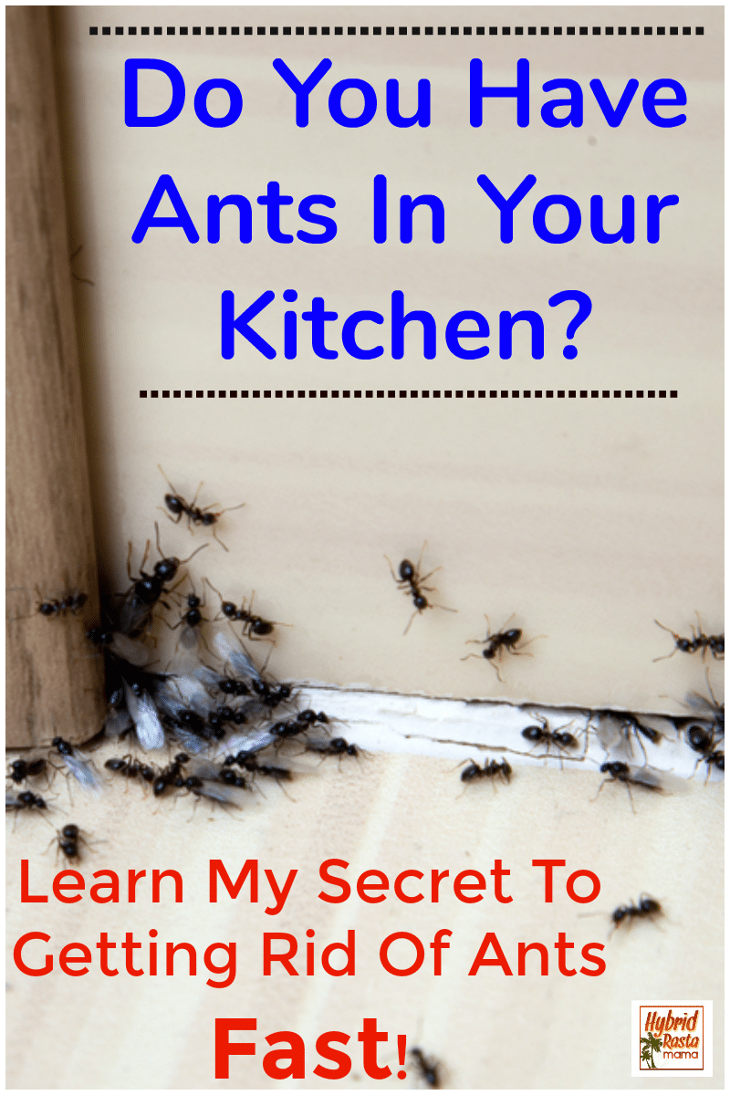 Ants in the kitchen on the floor