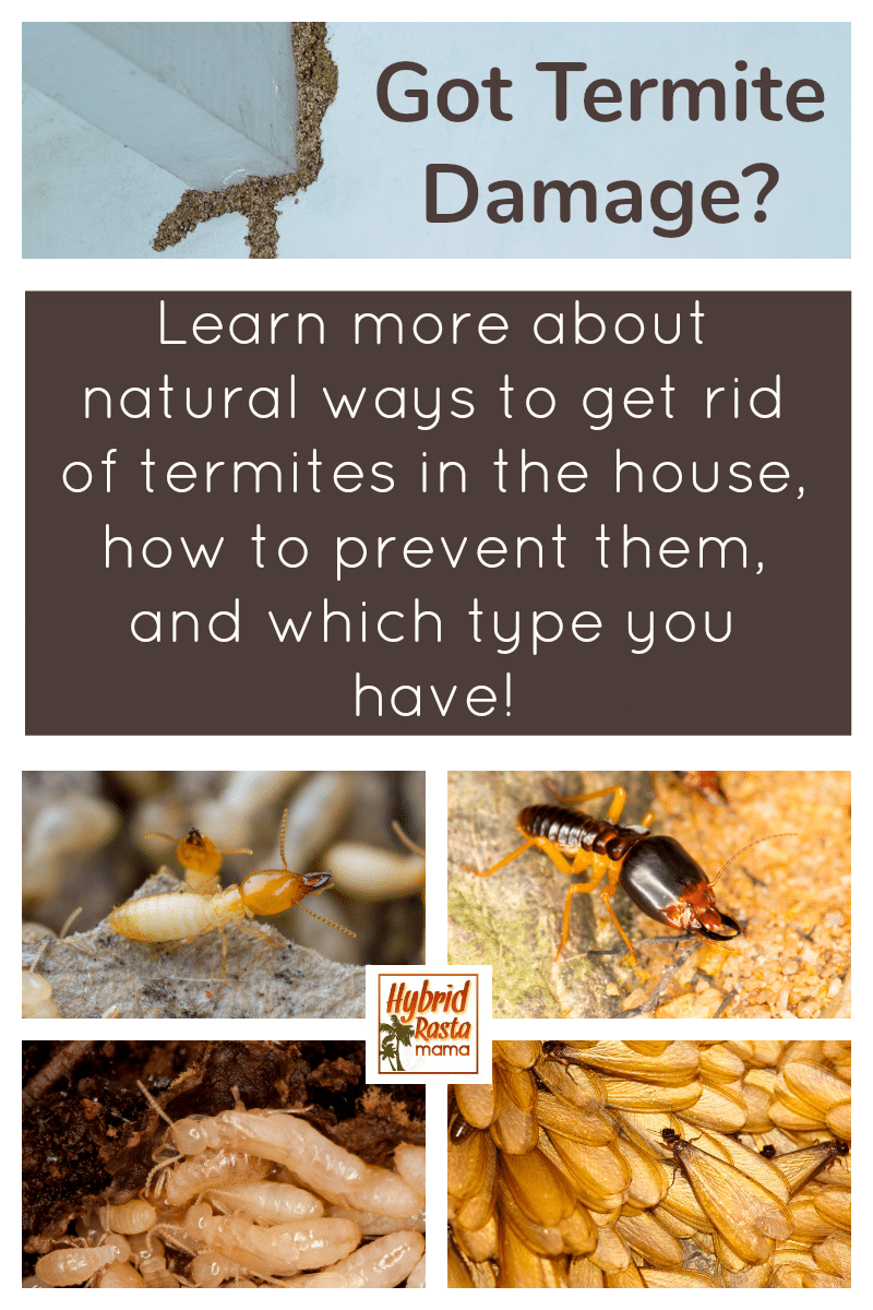 Collage of the types of termites as well as termite damage on a wall with information on how to kill termites naturally and prevent them from returning