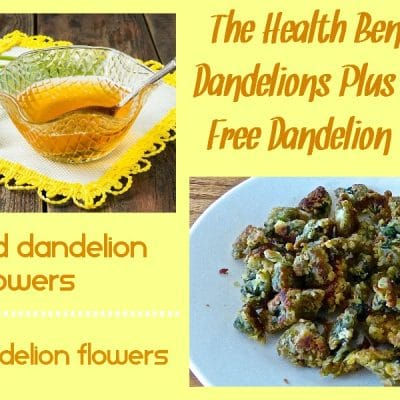 Fried Dandelions + Candied Dandelions (Gluten Free Recipes)