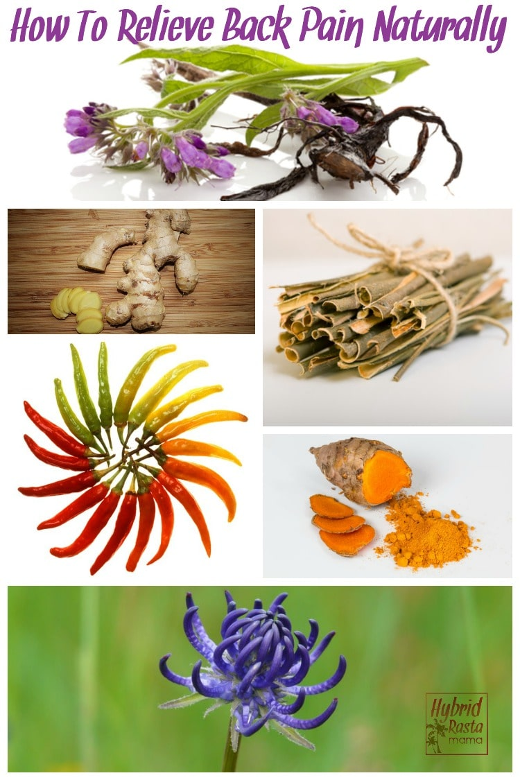 Collage of herbs for back pain relief