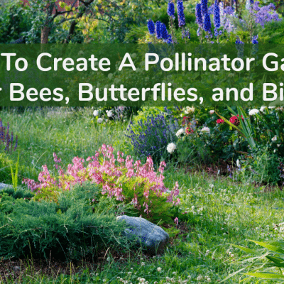 How to Create a Pollinator Garden For Bees, Butterflies, and Birds