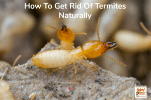 "Termites destroying a house with the caption ""do you know how to get rid of termites naturally?"""