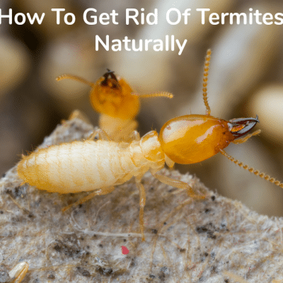 How To Get Rid Of Termites Naturally