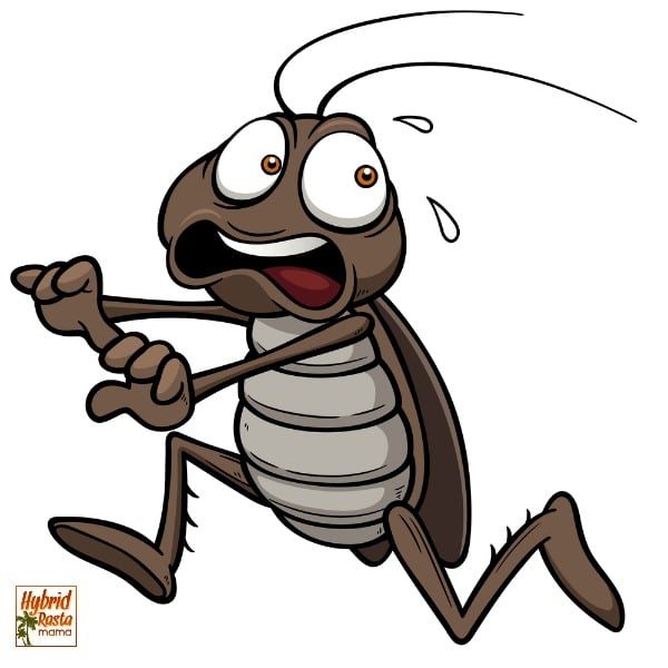 A cartoon cockroach running away