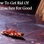 How To Get Rid Of Cockroaches For Good