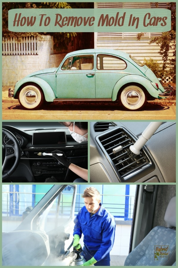 A collage with four images. A classic teal green VW bug parked in front of a white house with a white picket fence. How to remove mold in cars in written above the bug.  A car detailing brush going across a car air vent with tan interior.  A young man in blue coveralls fogging the inside of a car with blue seats. He is trying to remove mold in cars.