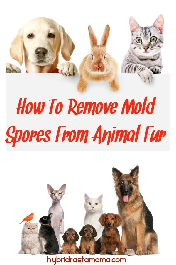 """Cute friendly pets on white background holding a sign that says """"how to prevent and remove mold spores from animal fur."""""""