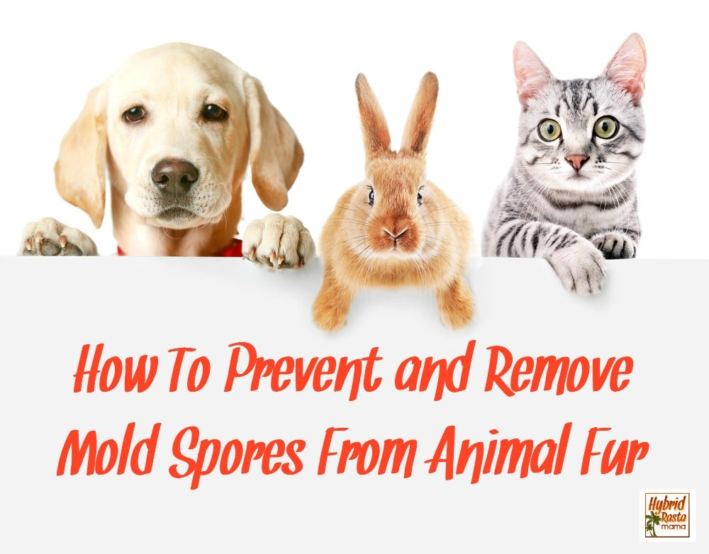 "Cute friendly pets on white background holding a sign that says ""how to prevent and remove mold spores from animal fur."""