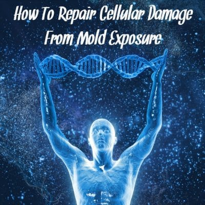 How To Repair Cellular Damage From Mold Exposure